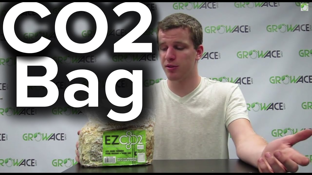 GrowAce.com - How to use EZ CO2 Bags for Indoor Grow Rooms or Grow Tents - YouTube  sc 1 st  YouTube & GrowAce.com - How to use EZ CO2 Bags for Indoor Grow Rooms or Grow ...