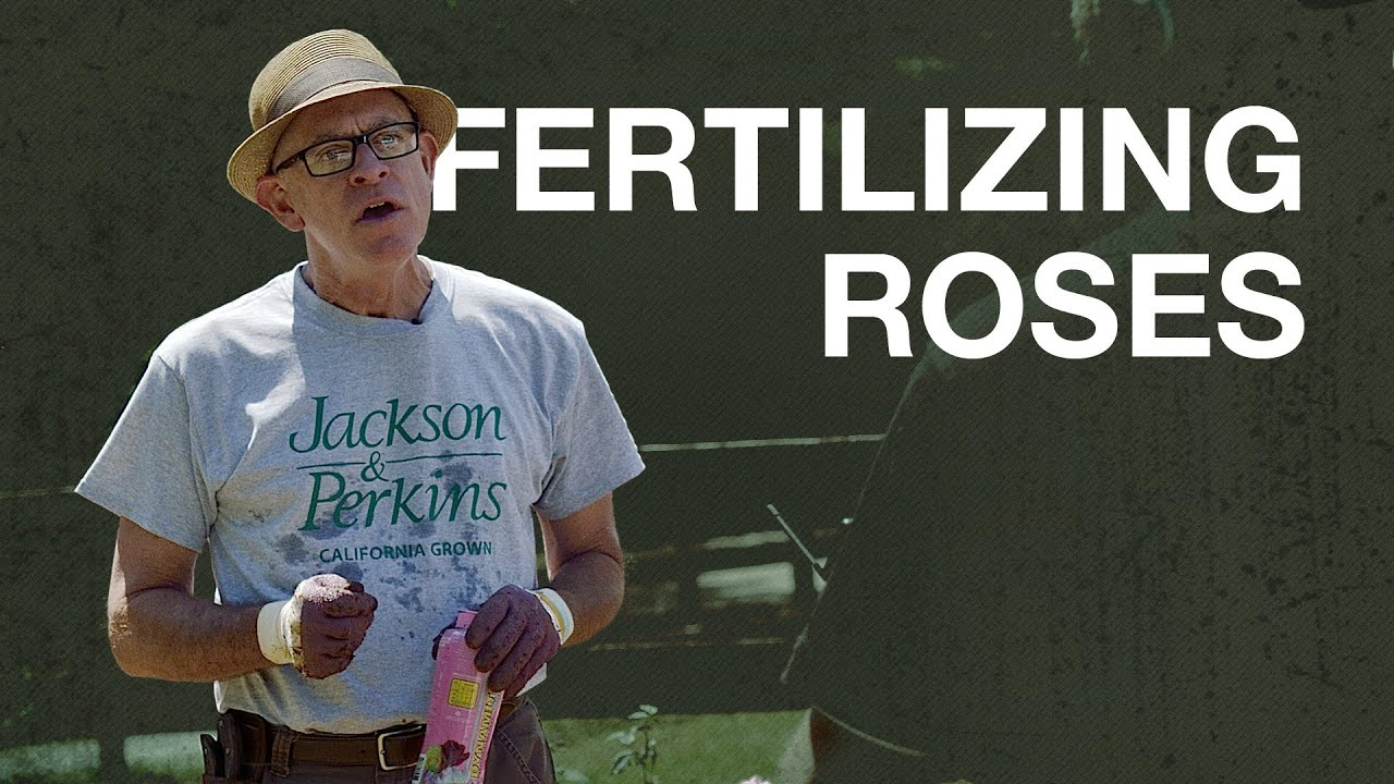 Fertilizing Roses with Paul Zimmerman