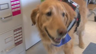 Therapy dog puts smiles on students faces at Frontier Central High School