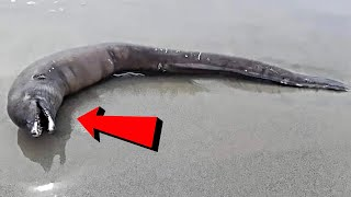 11 Scariest Things Found at the Beach