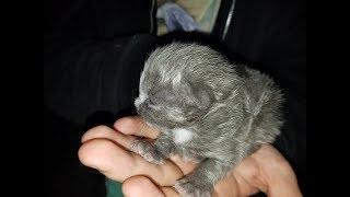 Человек нашёл котёнка в своей лодке… Через 5 месяцев он превратился в самого преданного питомца