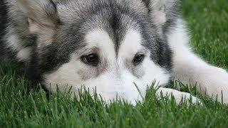 Собака за 70 000 оказалась в приюте с дворняжками – Судьба элитной собаки [Кот Тимка]