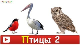 [ ПТИЦЫ для ДЕТЕЙ 2 часть ] с ГОЛОСАМИ. Развивающие ВИДЕО про птиц для детей в HD