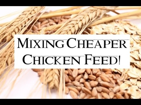 How To Make And Mix Cheaper Chicken Feed Updated Version Youtube