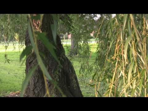 The Nauvoo Willow Tree ~ Reflections of Emma Hale Smith ♫
