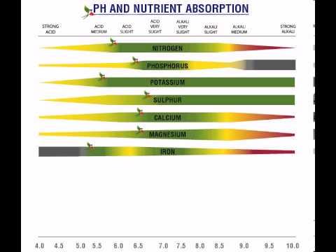 Buneba - PH and Nutrient Absorption