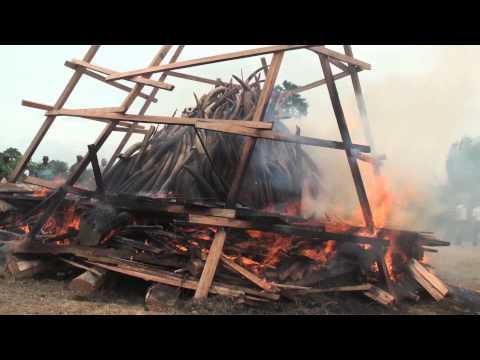 WWF Italia : Il rogo dell'avorio nel Gabon