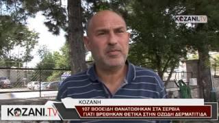 Θανάτωση 107 βοοειδών στα Σέρβια από την Οζώδη Δερματίτιδα