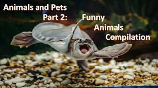 Animals And Pets Part 2: Funny Animals Compilation