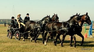 Piękne konie i jeźdźcy - HUBERTUS 2012 - Spała