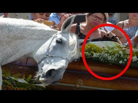 When A Brazilian Cowboy Died Suddenly, His Distraught Horse Did Something Remarkable At The Funeral