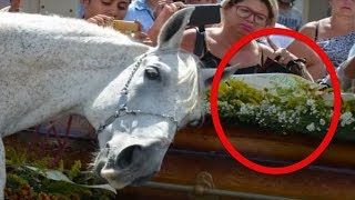 Baixar When A Brazilian Cowboy Died Suddenly, His Distraught Horse Did Something Remarkable At The Funeral