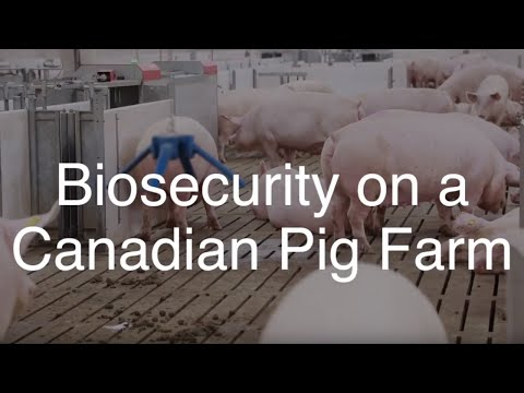 Biosecurity On A Canadian Pig Farm