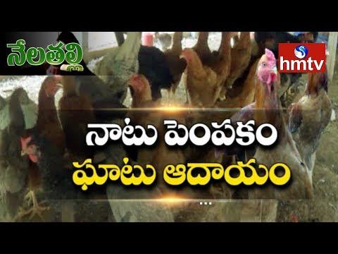 నాటు కోళ్ల పెంపకం..లాభదాయకం | Success Story of A Poultry Farmer | Nela Talli | hmtv