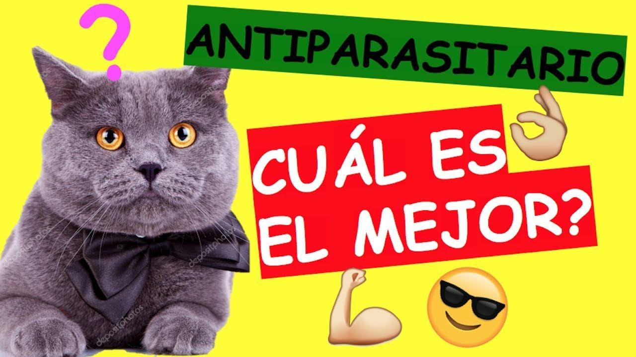 antiparasitario casero para gatos