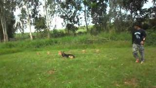 "8 Days Basic Obedience Training ""client Uma"". Part 2"