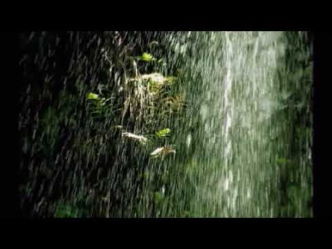 Amazon Rainforest Nature Sounds - Rain Sounds, Birds Chirping, with music (10 hours)