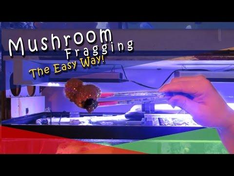 Mushroom Fragging The Easy Way