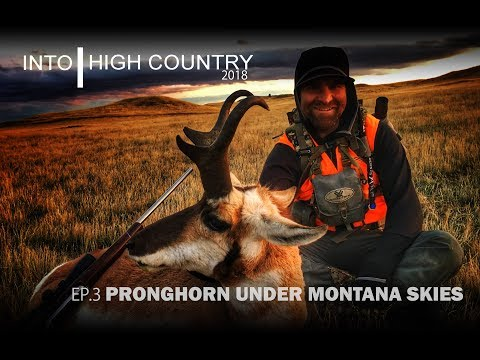 Pronghorn Under Montana Skies