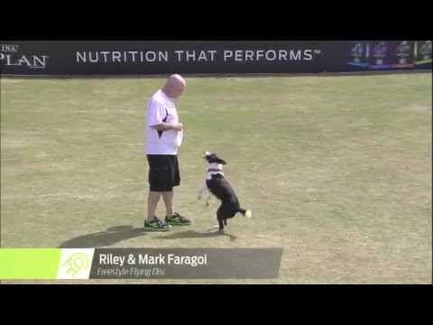 Flying Disc Dog Winner - 2014 Purina® Pro Plan® Incredible Dog Challenge Eastern Regionals