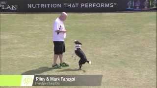 Flying Disc Dog Winner - 2014 Purina® Pro Plan® Incredible Dog Challenge Eastern Regionals