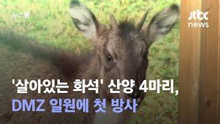 '살아있는 화석' 산양 4마리, DMZ 일원에 첫 방사 / JTBC 뉴스룸