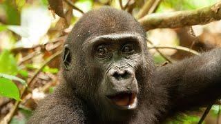 Mama Tembo Tours- Kingo
