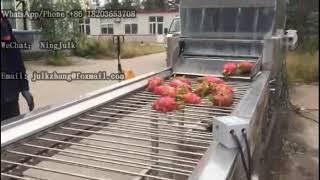 dragon fruit washing aฑd sorting line