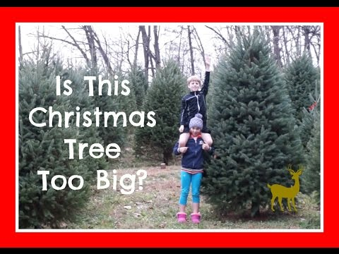 Is This Christmas Tree Too Big?   Flippin' Katie
