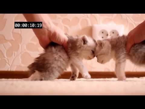 What Happens When Kittens Are Speeding