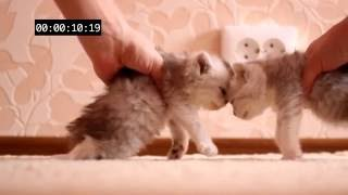 (Cat's crash test) Краштест (Жесть и нереально!!)