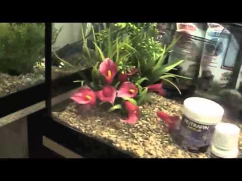 Tour Of The Aquarium At Dobbies
