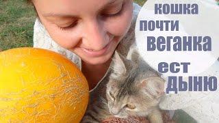 🐱Кошка Полу Веганка Кушает Дыню 😸😸😸🍉🍉🍉