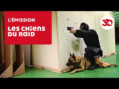 Les chiens du RAID à l'entraînement