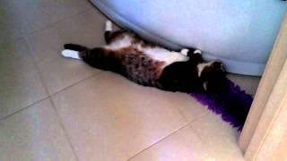 Котопёс балдеет на теплом полу