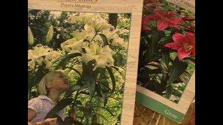 Гигантские лилии.Луковицы красивейших цветов бегонии,фрезии и лютиков!Обзор!
