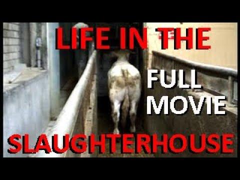 LIFE IN THE SLAUGHTERHOUSE - À L'ABATTOIR