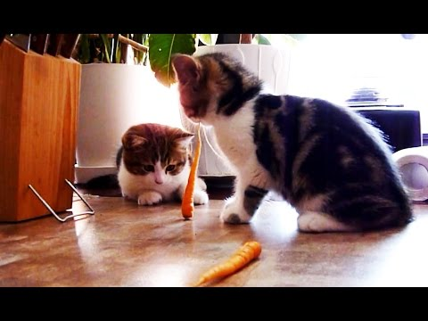 Kitten Goes On A Vegetable Diet