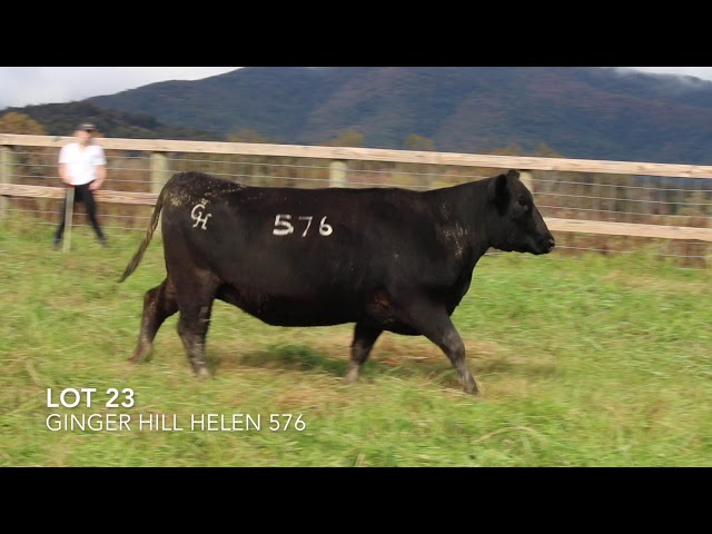 Ginger Hill Angus Lot 23