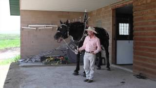 Horses: Reducing Colic With Equipride At Hidden Y Ranch With Enos Yoder