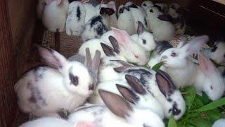 Mãn nhãn người xem với những con thỏ con cực kì đáng yêu và dễ thương