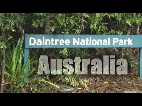 Australia, Daintree Rainforest  ( HD )