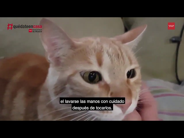 Vídeo consejos para propietarios de mascotas.
