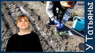 Выращиваем КРЕСС-САЛАТ: кладезь витаминов и миниралов!
