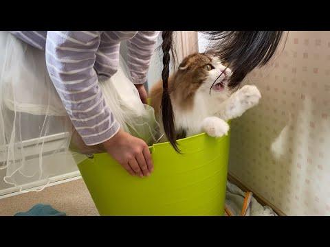 娘と一緒にかごに入る猫&娘の宿題中にランドセルに入る猫