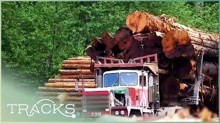 TIMBER! Real Lumberjacks Of Canada | TRACKS