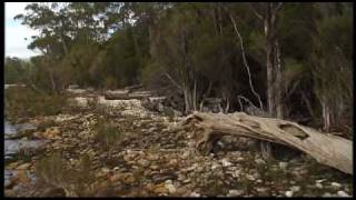 Going Bush 3 - Episode 1 - Huon Pine Salvage
