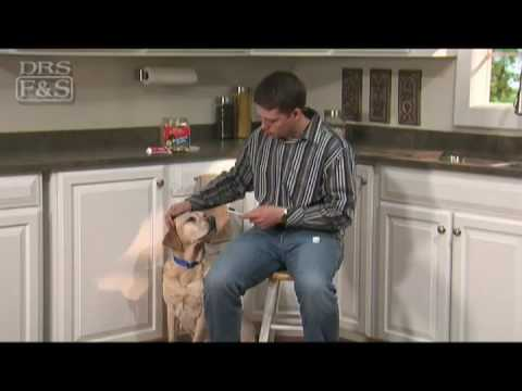 how-to-clean-your-dog's-teeth-(drsfostersmith)