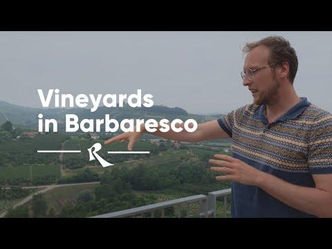 Paitin and Barbaresco - The Vineyards