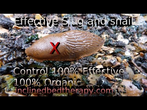 Simple Slug & Snail Trap For Organic Gardens 100% effective! Safe for children and pets